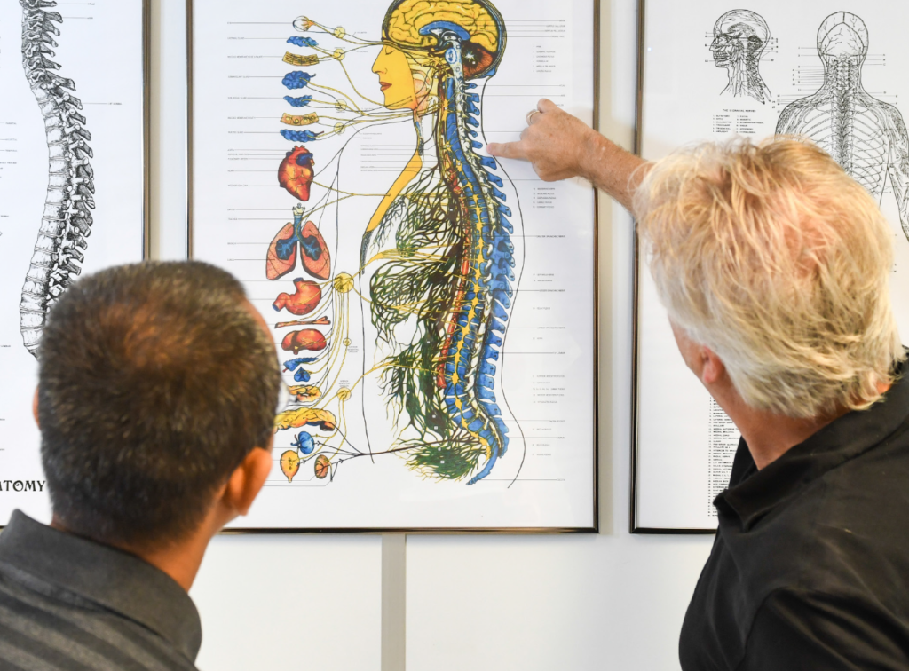 uitleg poster organen